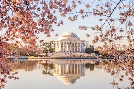 cherry blossom festival in washington dc