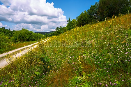 country road in an idyllic landscape