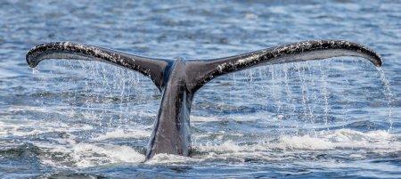 background, nature, animal, spray, sea, usa - B135251230