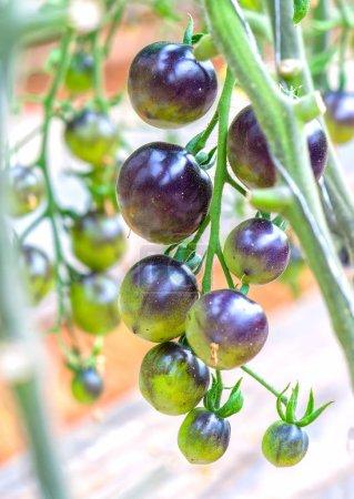 market, summer, nature, leaf, plant, brown - B185742306