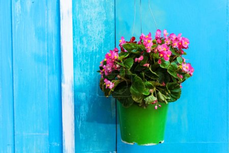 green color vibrant design beautiful decoration