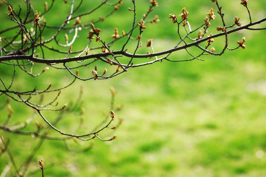 spring background branch grass stem green