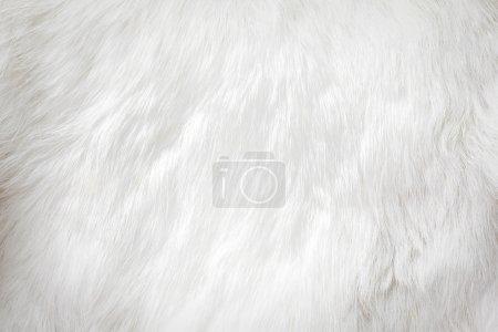 Media-id B28380699