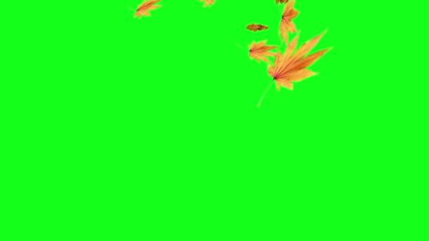 Video B273263778