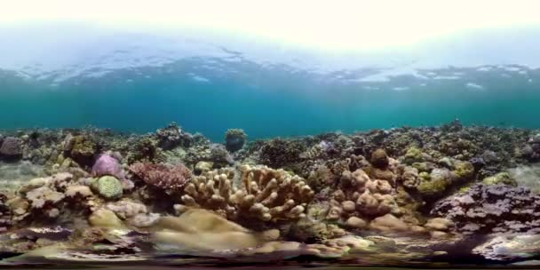 colorful nature water sea wildlife tropical