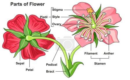 vector, view, illustration, model, leaf, plant - B209863668