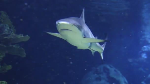 water fish bubbles underwater diving shark