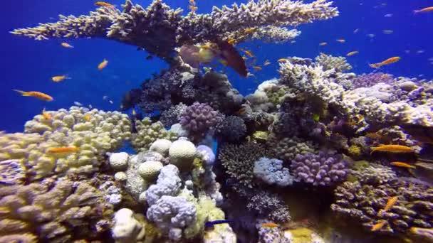 sea fish ocean diving egypt corals