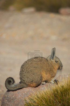 adult, park, nature, head, natural, animal - B78657882