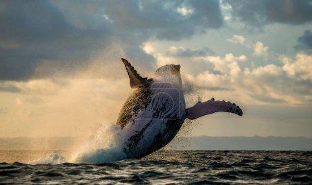 photography nature water natural animal sea