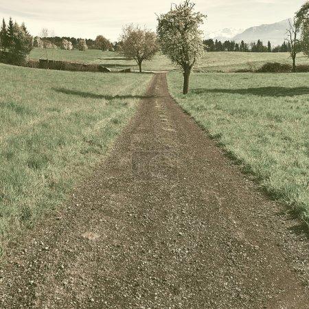 sky, swiss, path, grass, meadow, field - B80547138