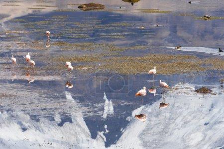 group, reflection, park, nature, animal, mountain - B105597660