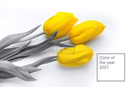 color yellow white background colorful copy