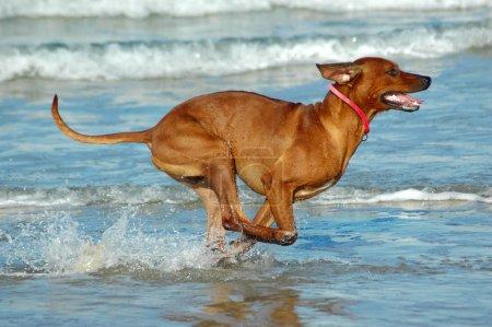 fun on outdoors wet outdoor water